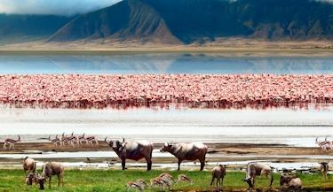 Belezas do Quênia e Tanzânia